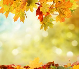 leaves-autumn-fall-seaon